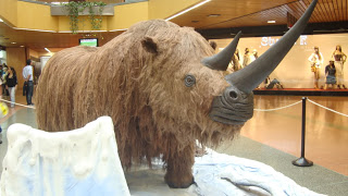 Rinoceronte lanudo vivió en la última era glacial