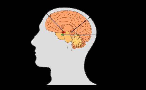 El dmt se produce en la gl 225 ndula pineal el camino al despertar la