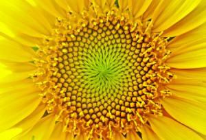 conscious_universe472_02_small